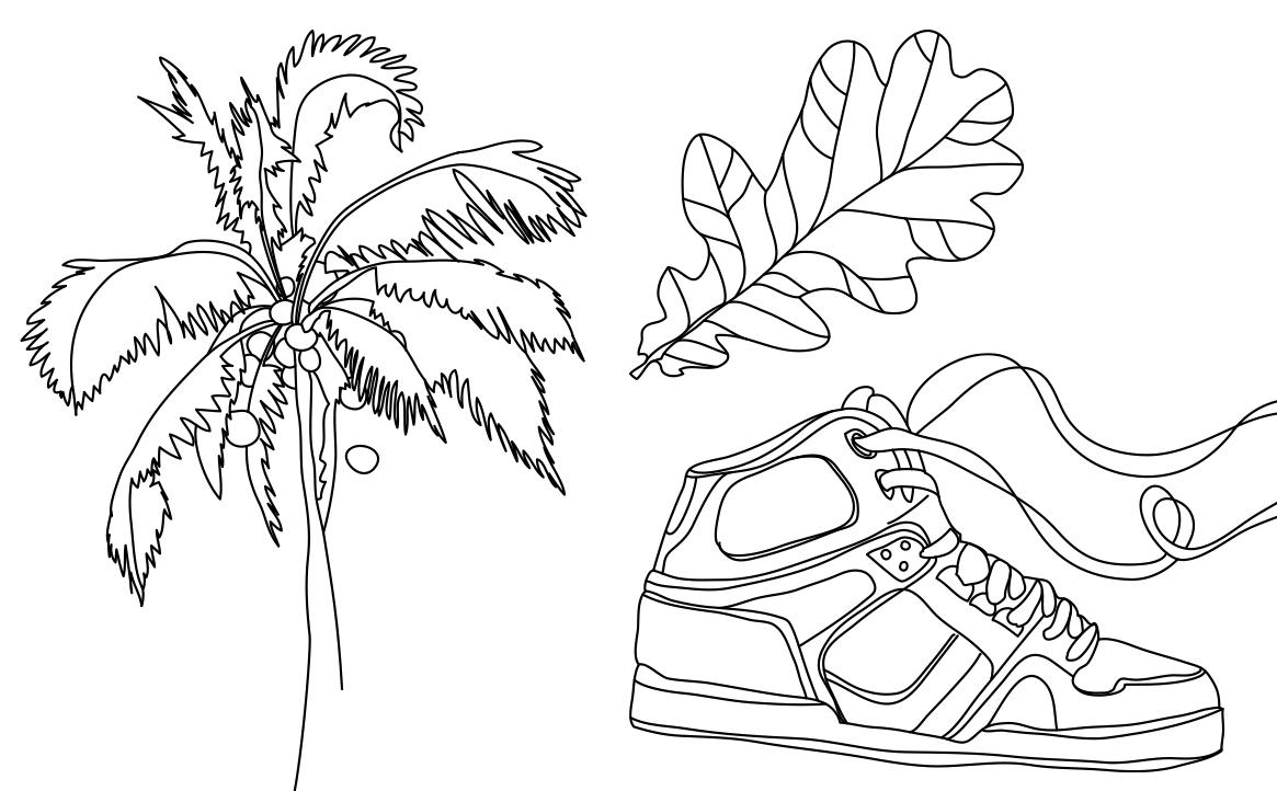 Illustration: Palmtree, leaf, trainer