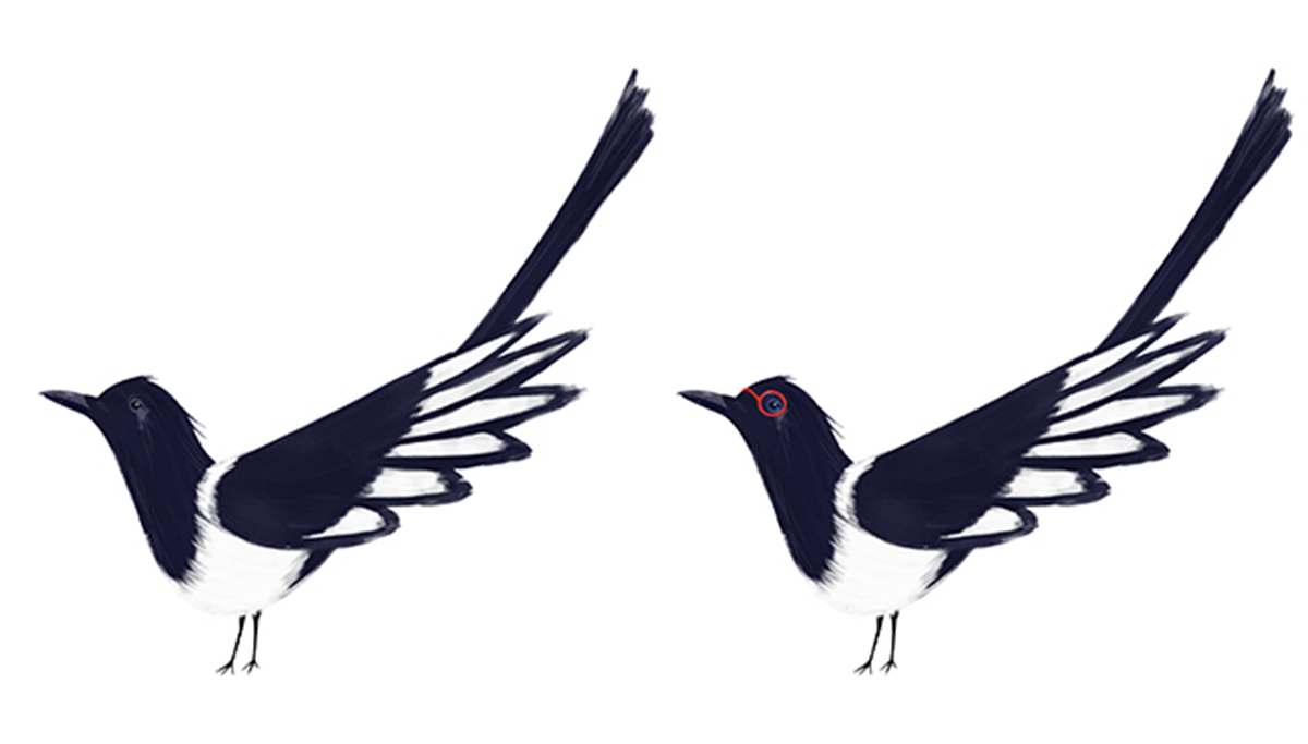 Character design: Miga the clever magpie