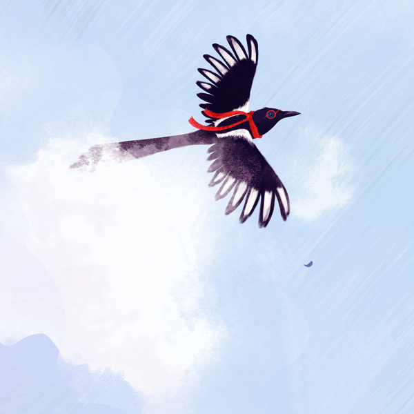 Illustration: Magpie flying