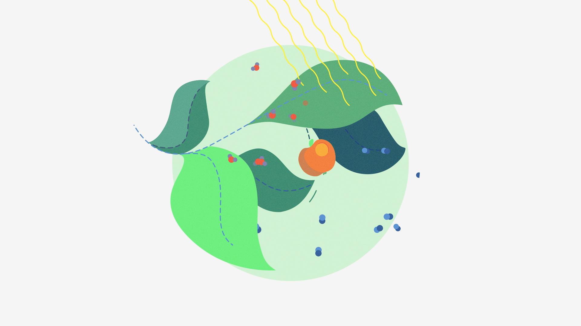 Stillframe: Photosynthesis